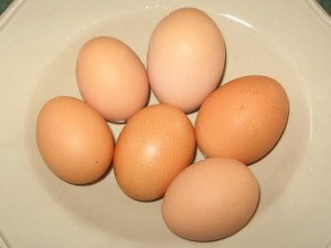 Farm Fresh Eggs: Duck, Chicken, Turkey