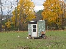 Grass fed free-run chicken coop